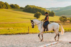 drezurny vycvik kona